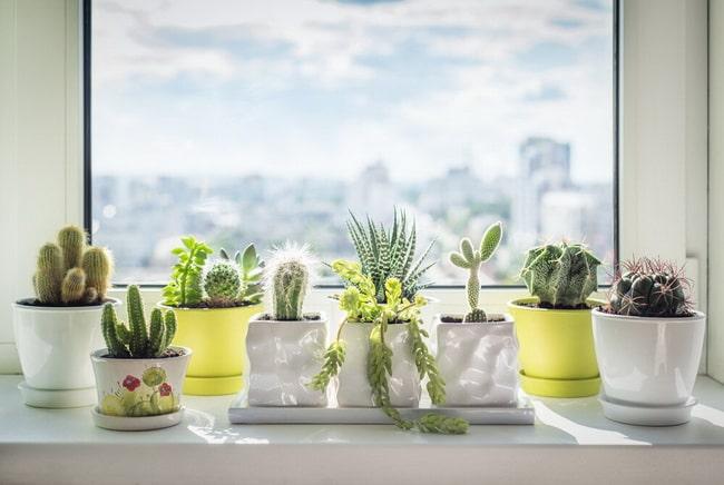 De qué manera decorar tu casa con plantas